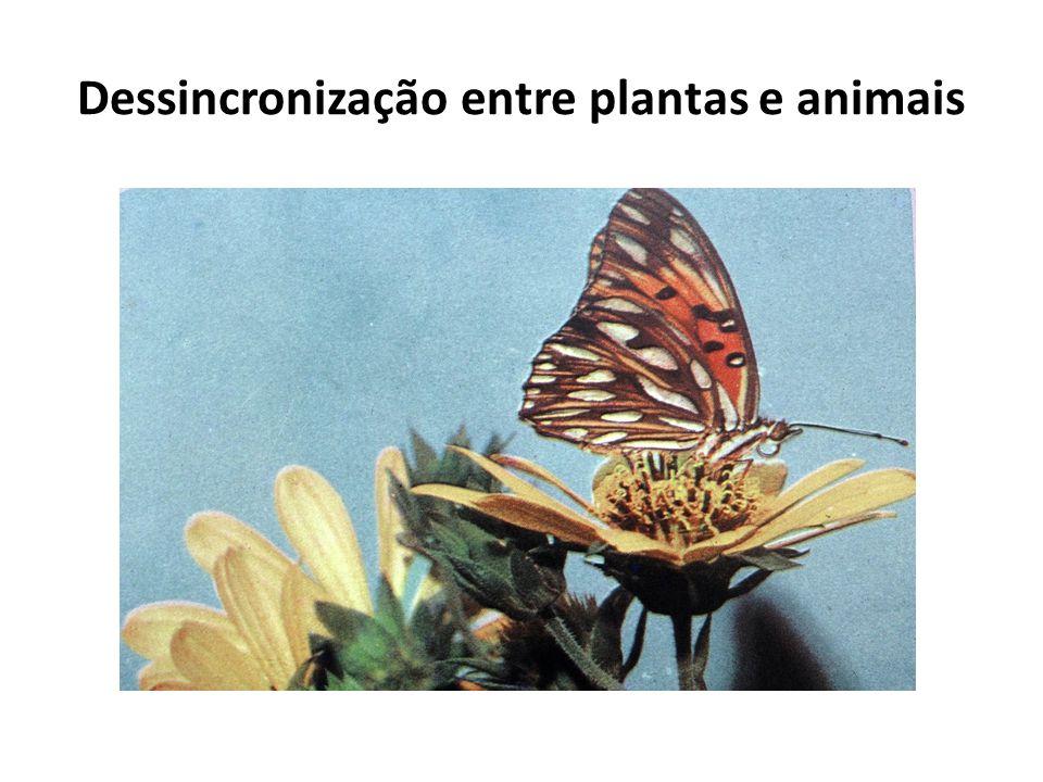 Dessincronização entre plantas e animais