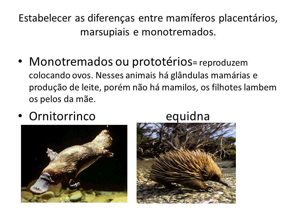 Estabelecer as diferenças entre mamíferos placentários, marsupiais e monotremados.