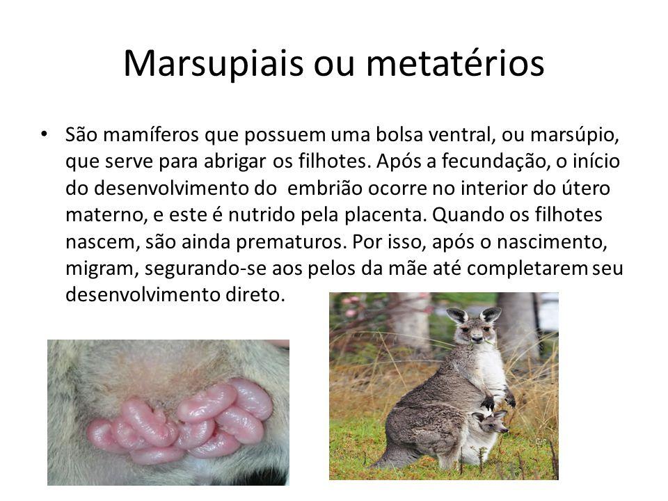 Marsupiais ou metatérios