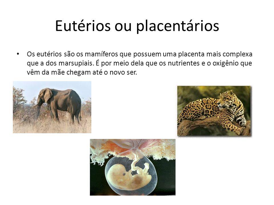 Eutérios ou placentários