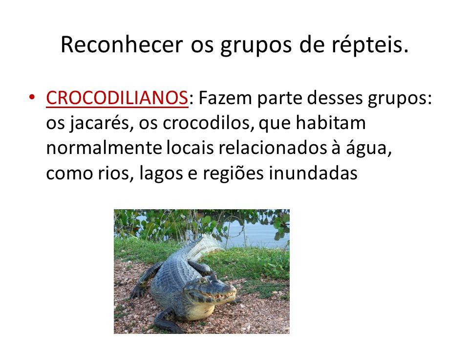 Reconhecer os grupos de répteis.