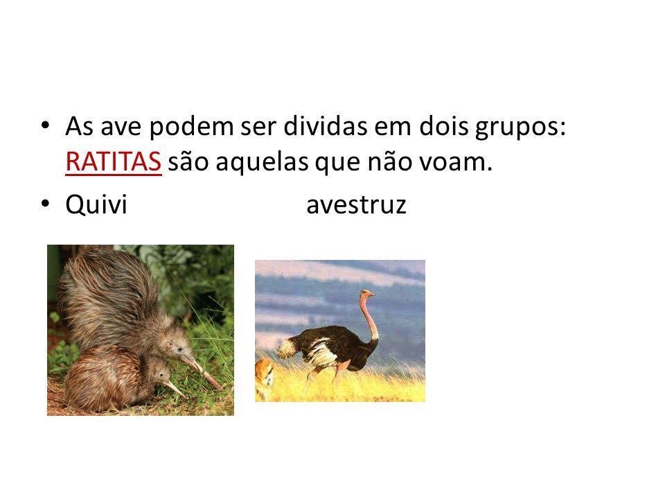 As ave podem ser dividas em dois grupos: RATITAS são aquelas que não voam.
