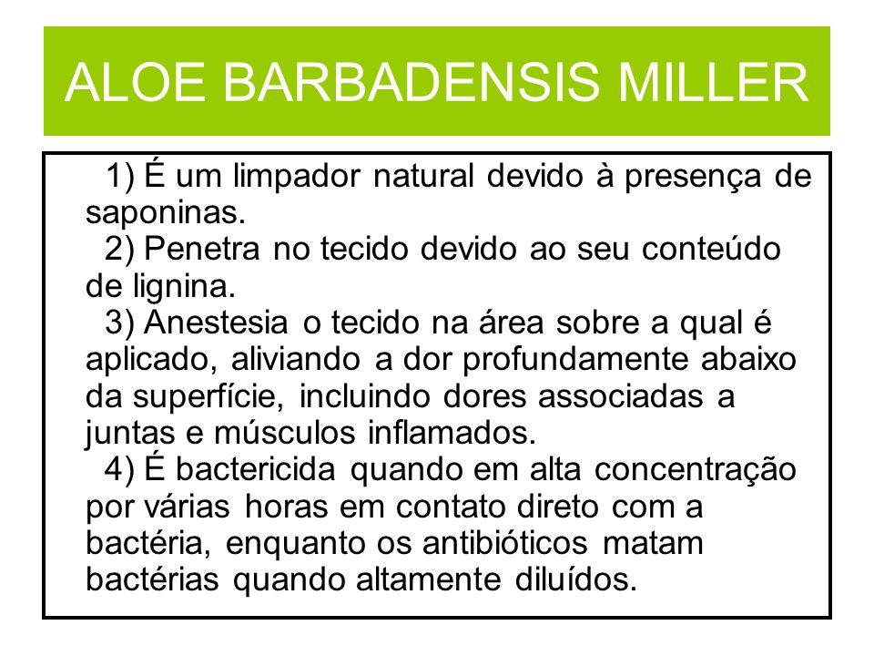 ALOE BARBADENSIS MILLER