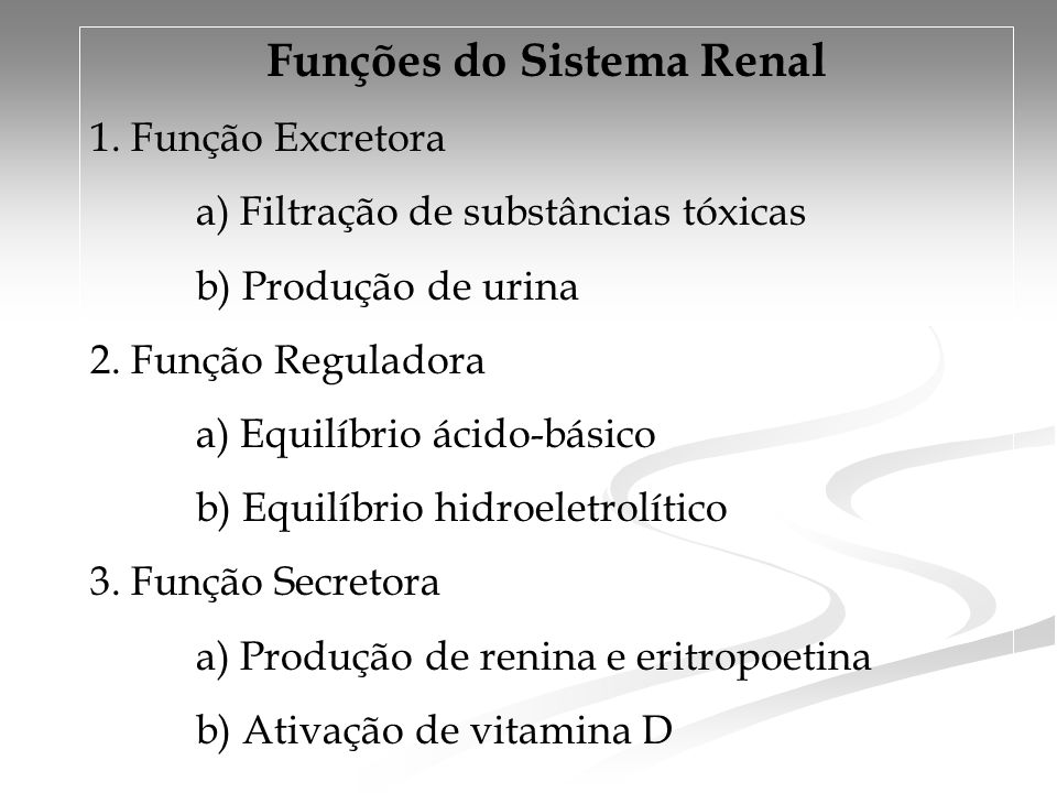Funções do Sistema Renal