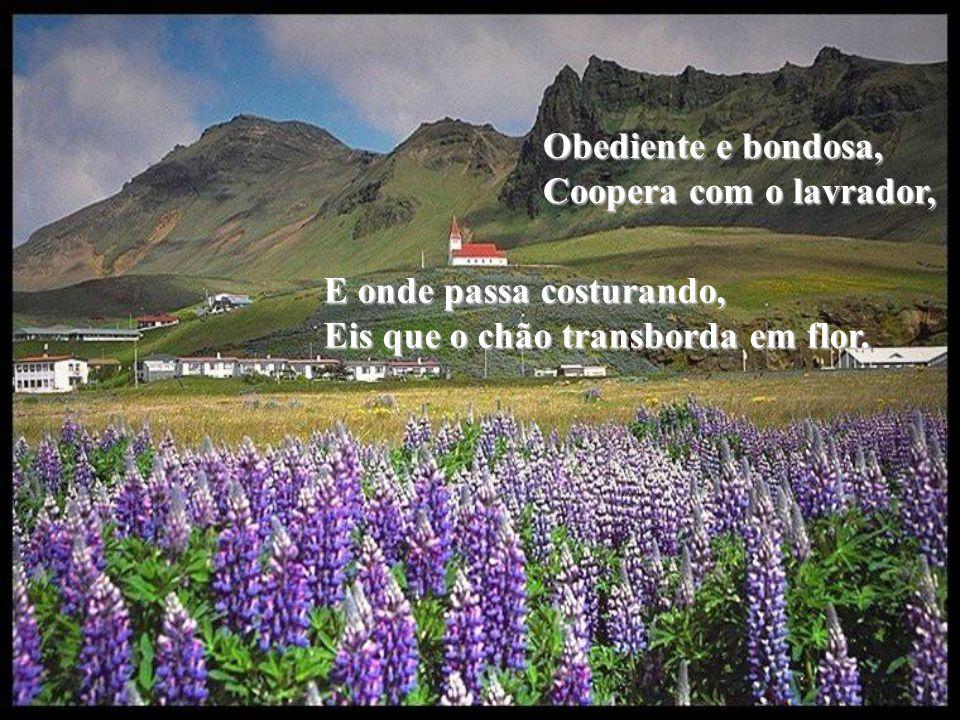 Obediente e bondosa, Coopera com o lavrador, E onde passa costurando, Eis que o chão transborda em flor.
