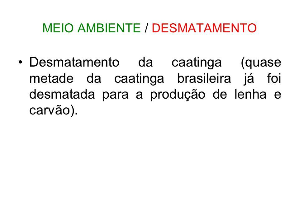 MEIO AMBIENTE / DESMATAMENTO