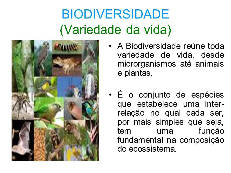 BIODIVERSIDADE (Variedade da vida)