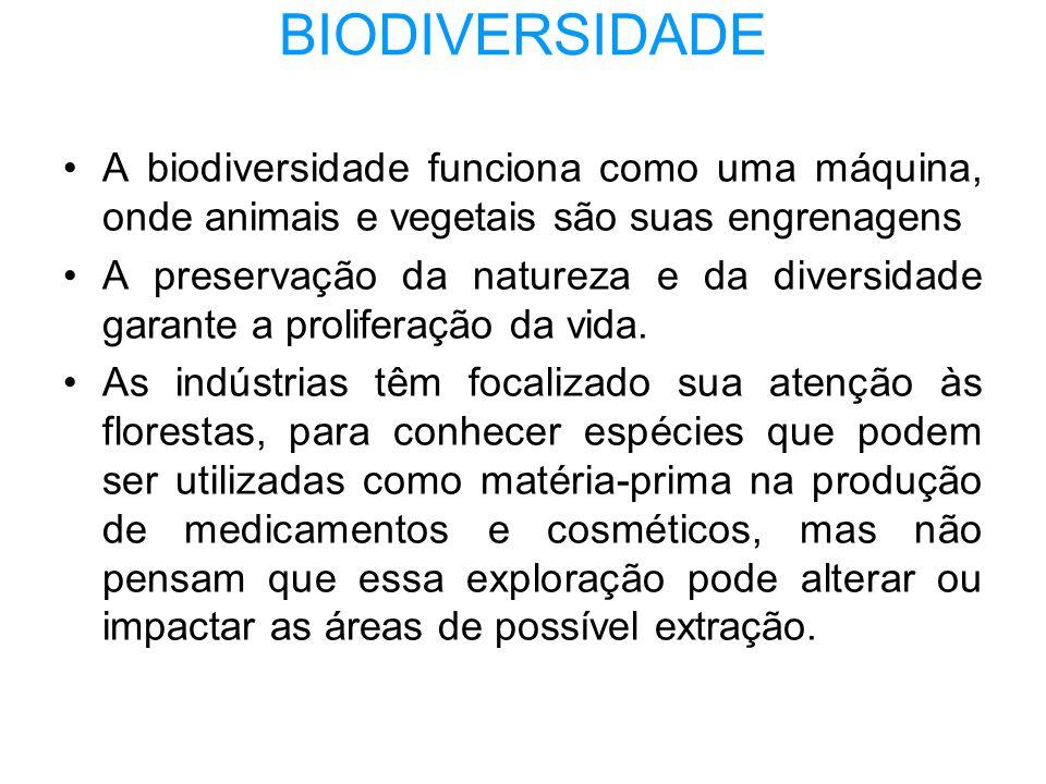 BIODIVERSIDADE A biodiversidade funciona como uma máquina, onde animais e vegetais são suas engrenagens.
