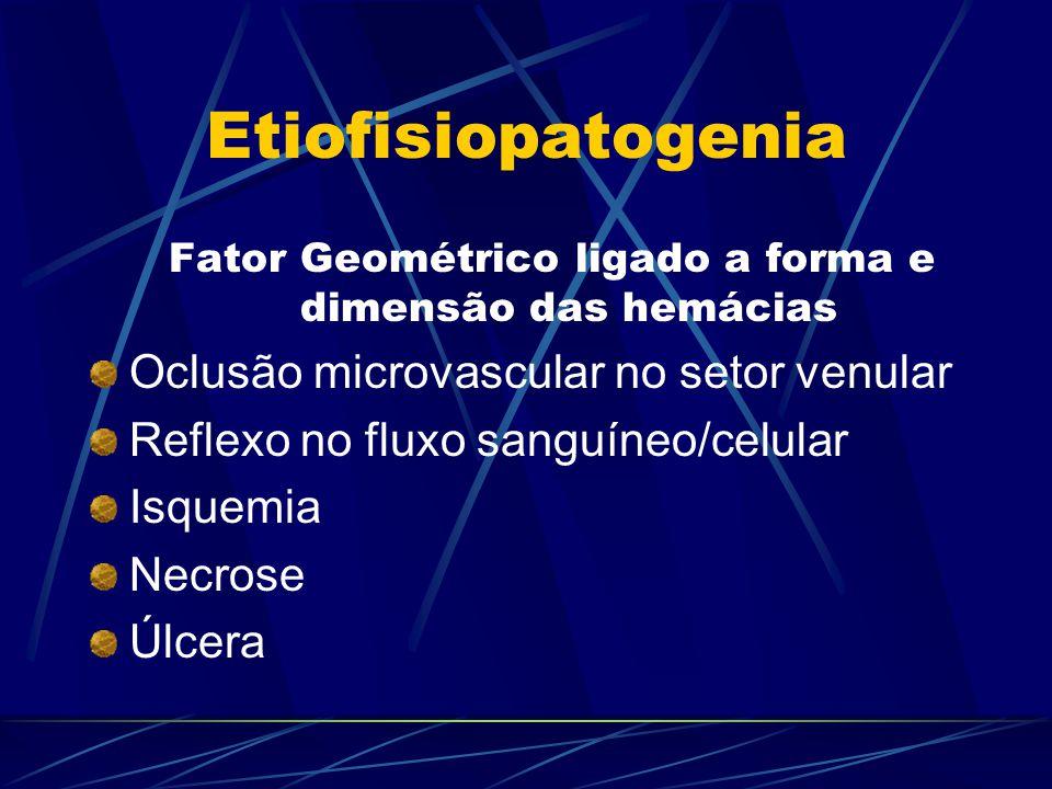 Fator Geométrico ligado a forma e dimensão das hemácias