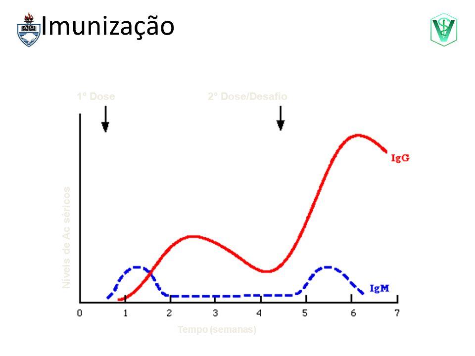Imunização 1° Dose 2° Dose/Desafio Níveis de Ac séricos
