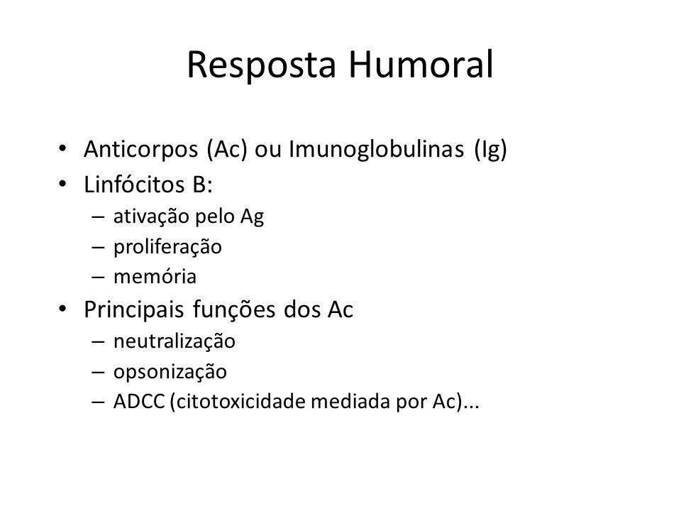 Resposta Humoral Anticorpos (Ac) ou Imunoglobulinas (Ig) Linfócitos B: