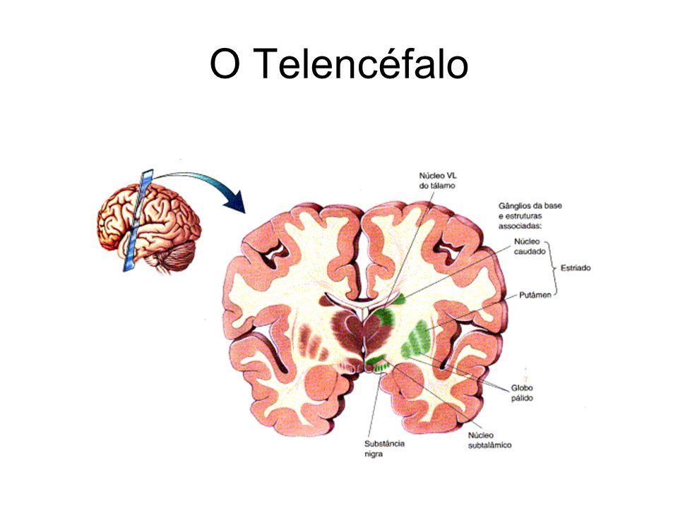 O Telencéfalo