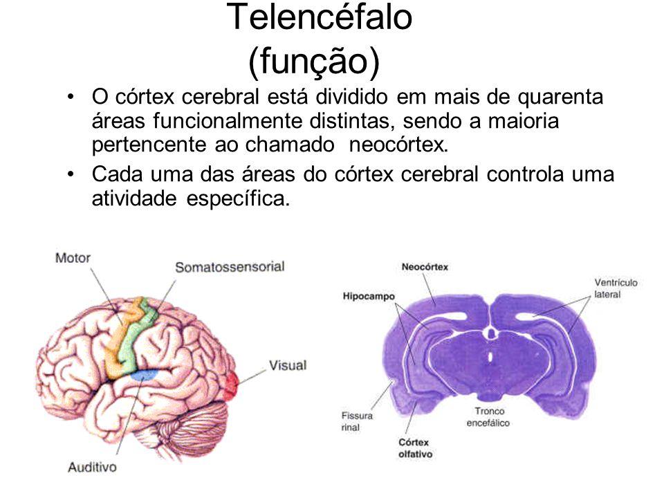 Telencéfalo (função)