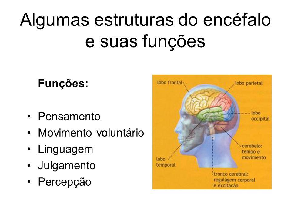 Algumas estruturas do encéfalo e suas funções Córtex Cerebral