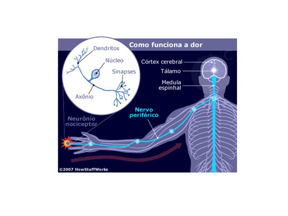 Cortex e a trasmissão da dor