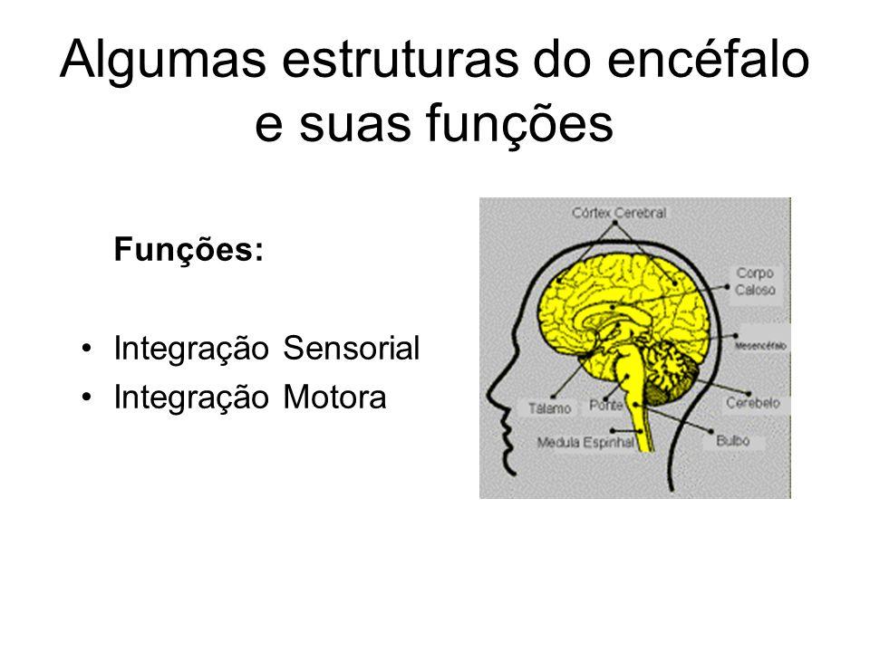 Algumas estruturas do encéfalo e suas funções Tálamo