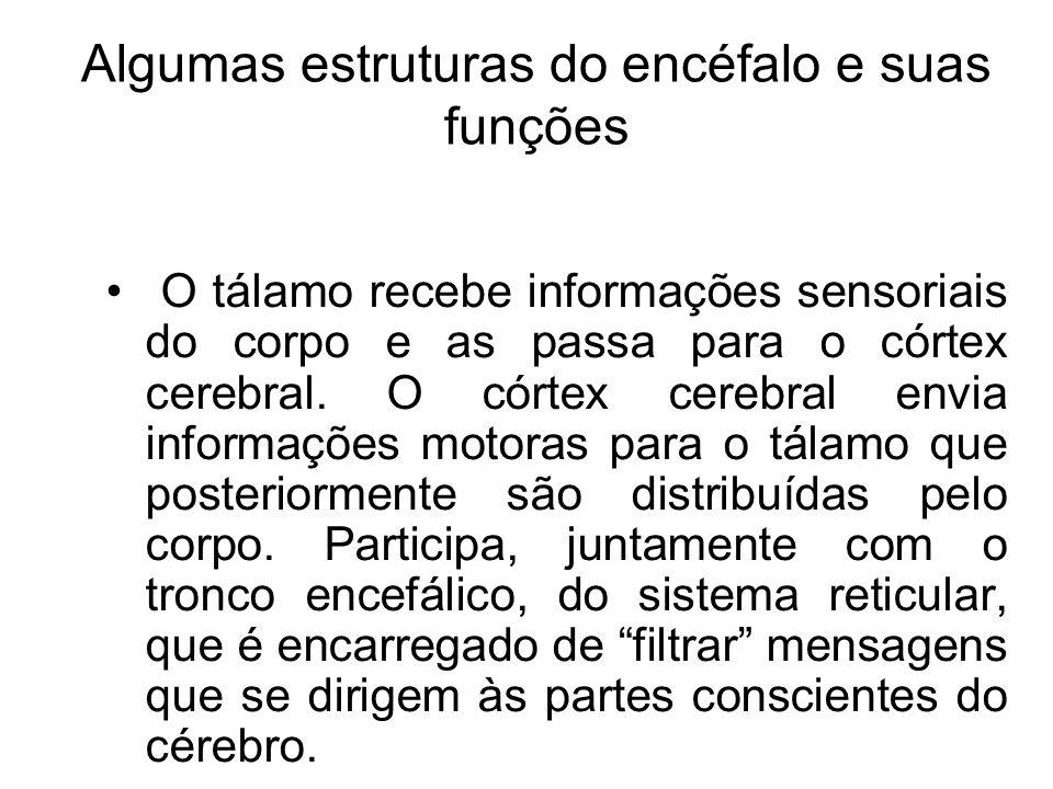 Algumas estruturas do encéfalo e suas funções Tálamo Recapitulando...