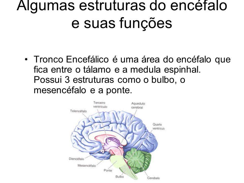 Algumas estruturas do encéfalo e suas funções Tronco Encefálico