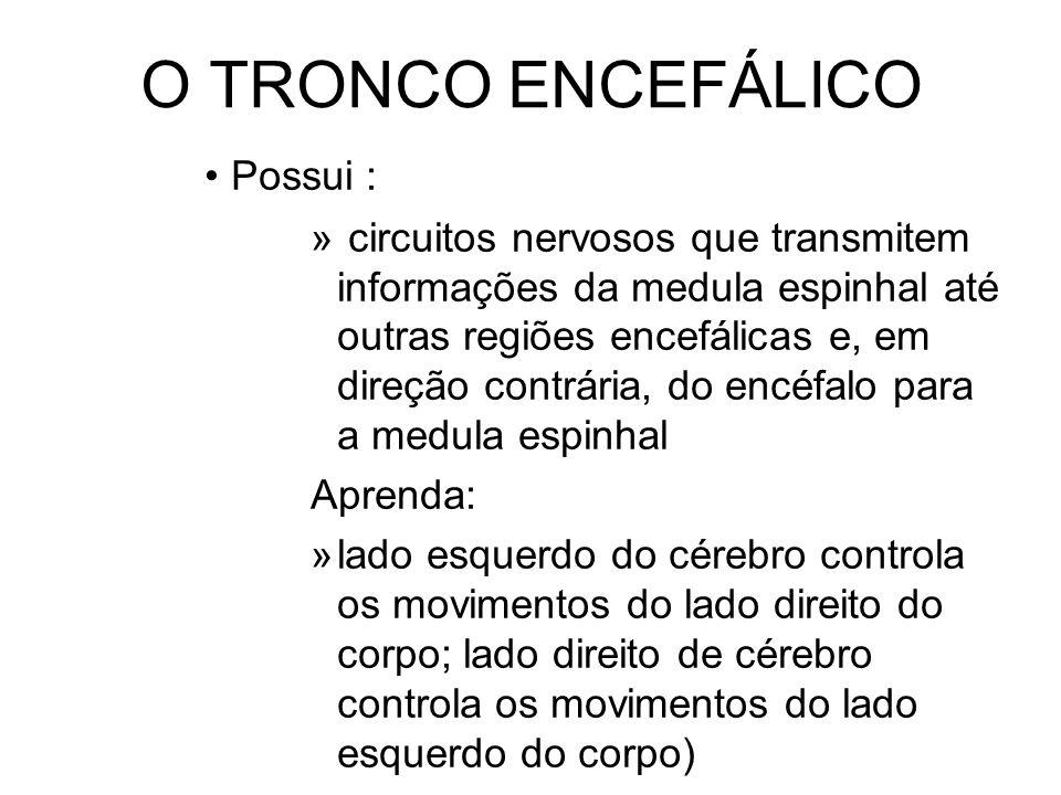 O TRONCO ENCEFÁLICO Possui :