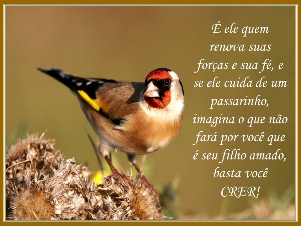 É ele quem renova suas forças e sua fé, e se ele cuida de um passarinho, imagina o que não fará por você que é seu filho amado, basta você CRER!