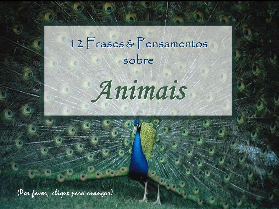 12 Frases & Pensamentos sobre Animais