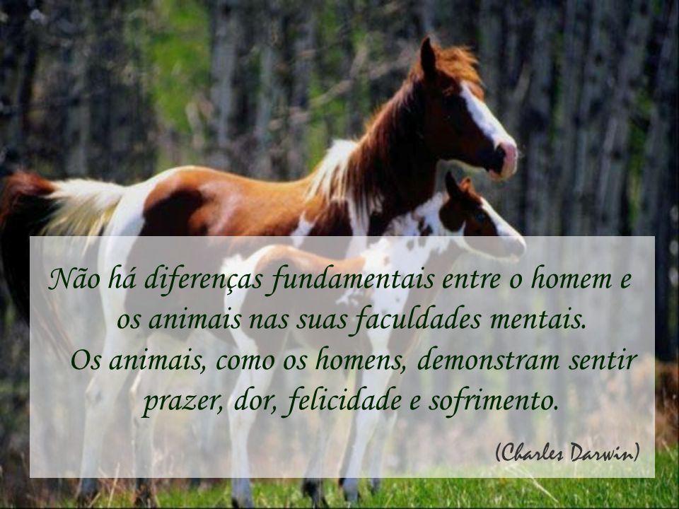 Não há diferenças fundamentais entre o homem e os animais nas suas faculdades mentais. Os animais, como os homens, demonstram sentir prazer, dor, felicidade e sofrimento.