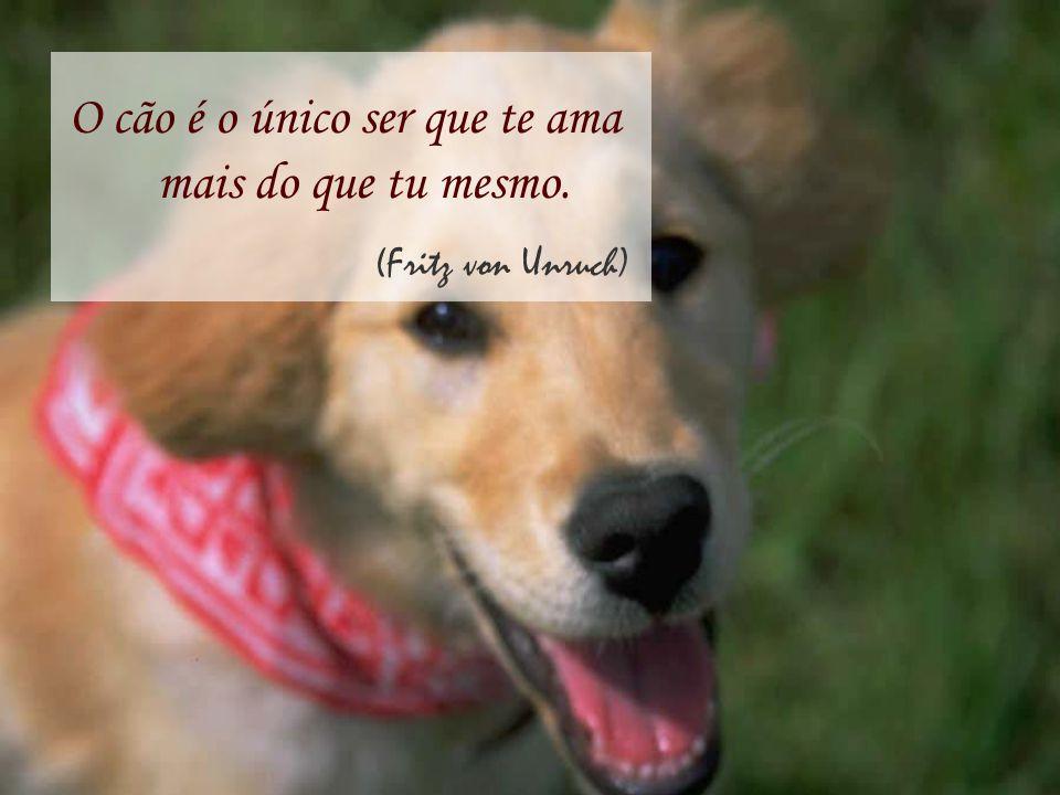 O cão é o único ser que te ama mais do que tu mesmo.