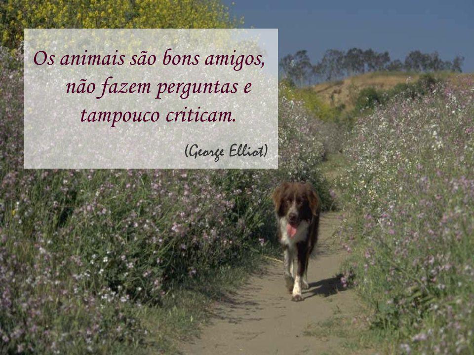 Os animais são bons amigos, não fazem perguntas e tampouco criticam.