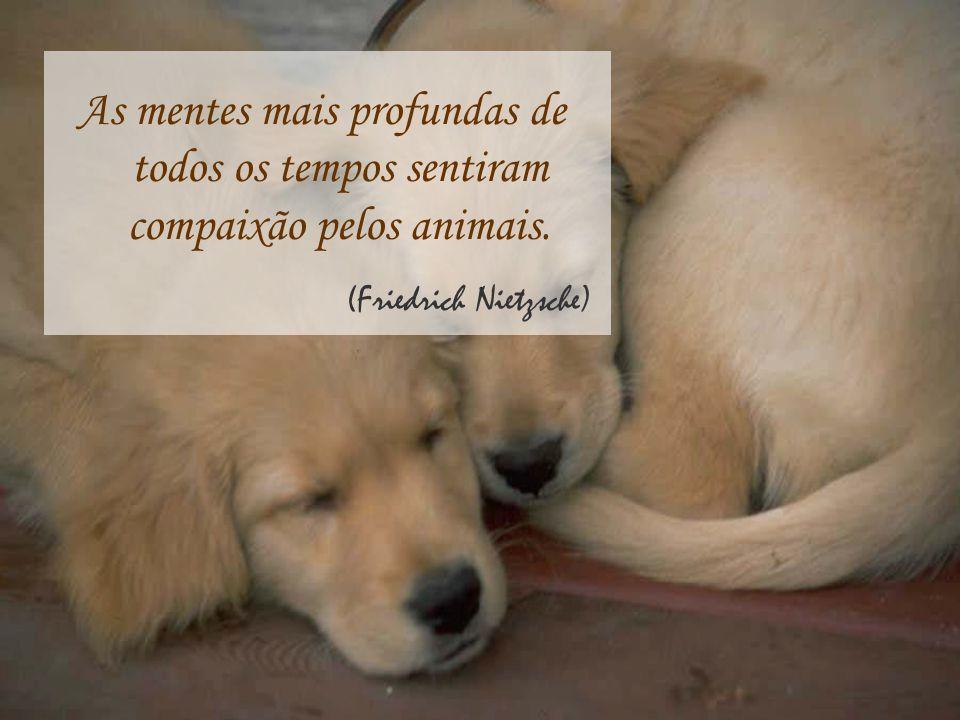 As mentes mais profundas de todos os tempos sentiram compaixão pelos animais.