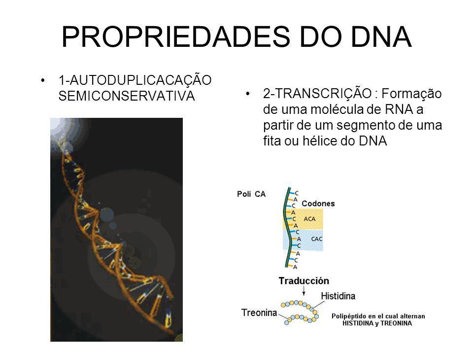 PROPRIEDADES DO DNA 1-AUTODUPLICACAÇÃO SEMICONSERVATIVA