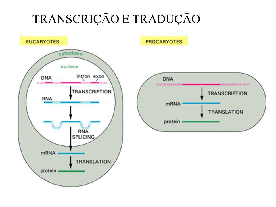 TRANSCRIÇÃO E TRADUÇÃO