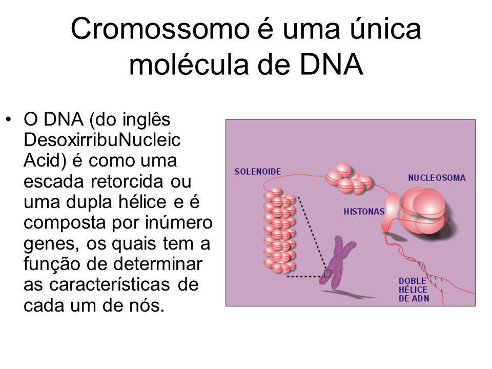 Cromossomo é uma única molécula de DNA