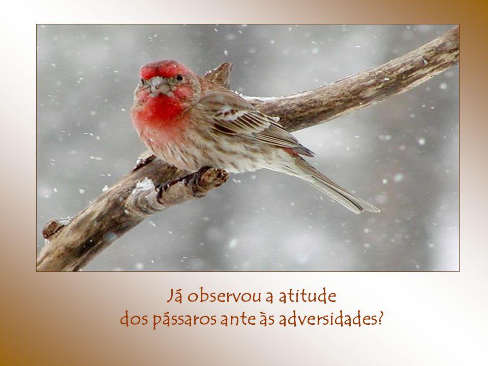 dos pássaros ante às adversidades