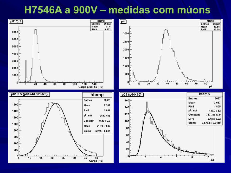 H7546A a 900V – medidas com múons