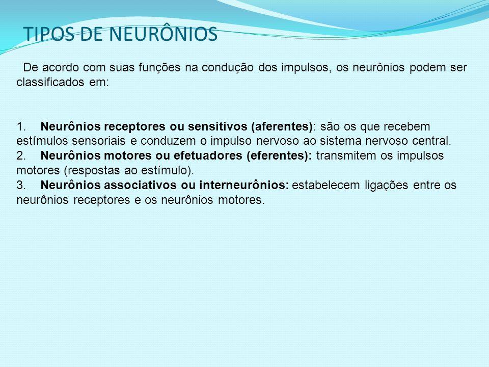 TIPOS DE NEURÔNIOS De acordo com suas funções na condução dos impulsos, os neurônios podem ser classificados em: