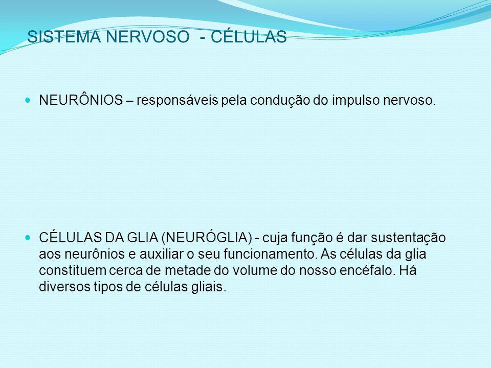 SISTEMA NERVOSO - CÉLULAS