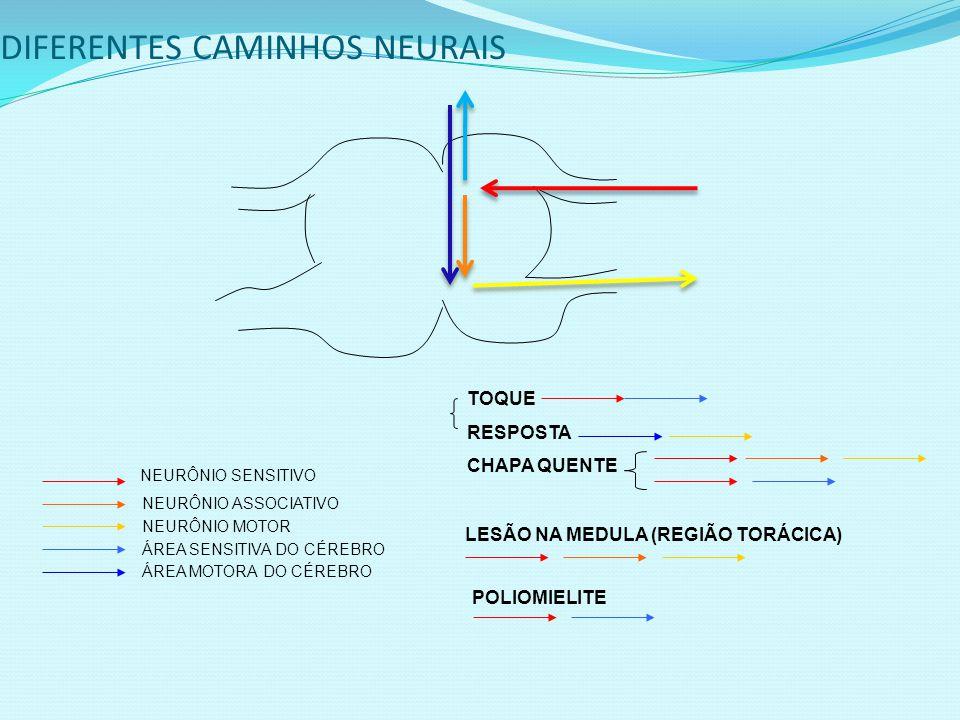 DIFERENTES CAMINHOS NEURAIS