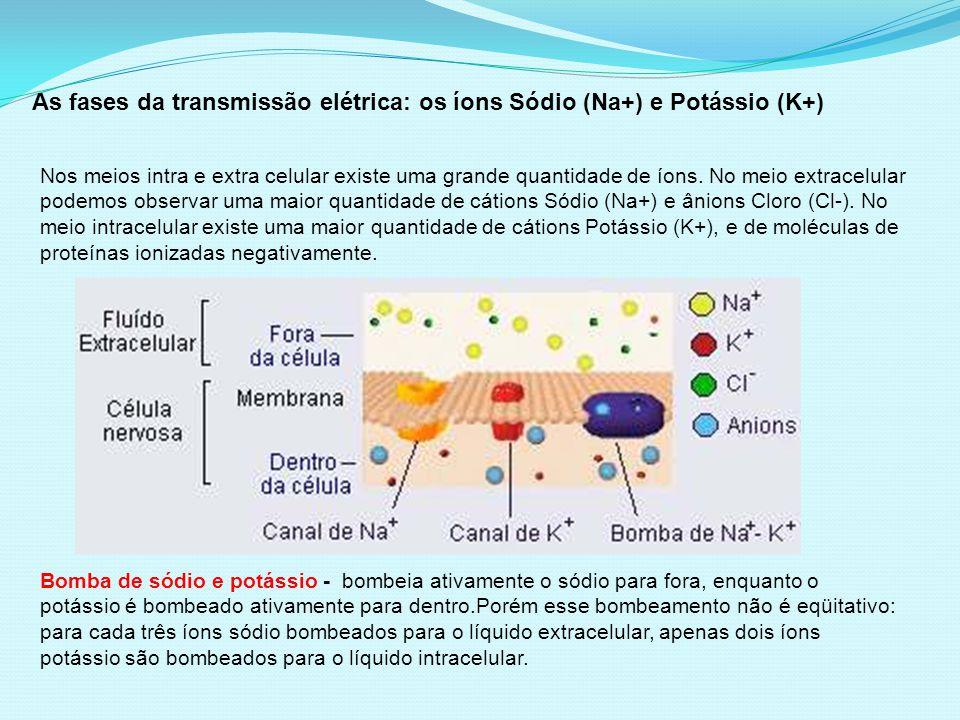 As fases da transmissão elétrica: os íons Sódio (Na+) e Potássio (K+)