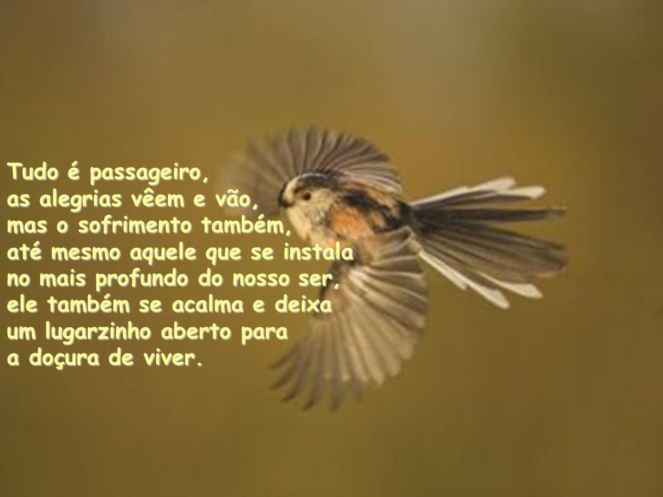 Tudo é passageiro, as alegrias vêem e vão, mas o sofrimento também, até mesmo aquele que se instala.