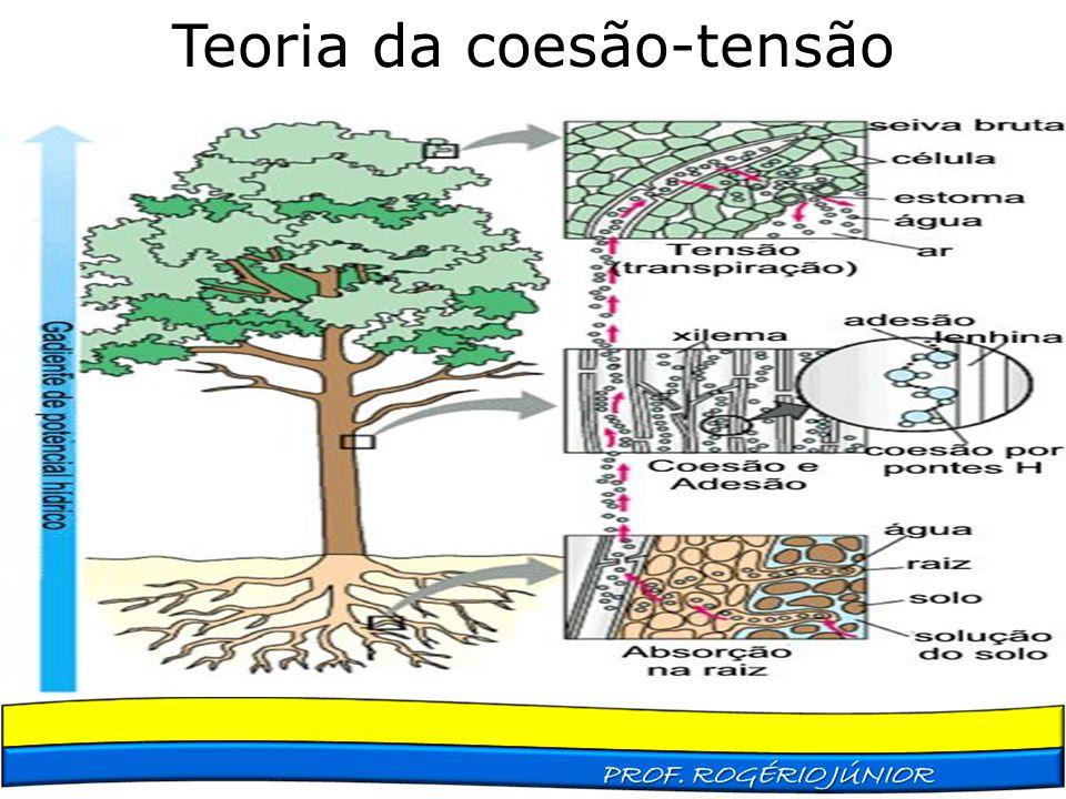 Teoria da coesão-tensão
