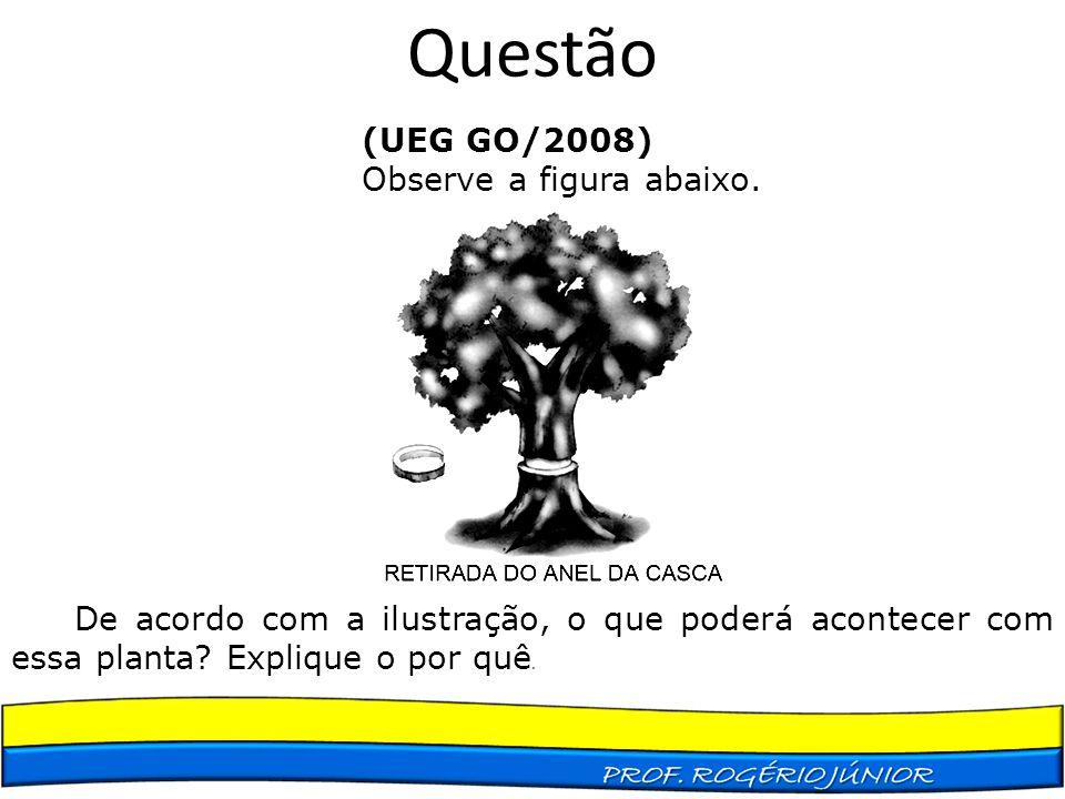 Questão (UEG GO/2008) Observe a figura abaixo.