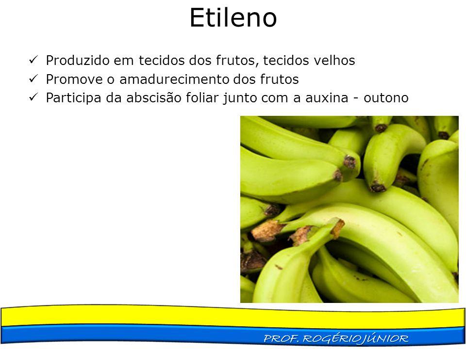 Etileno Produzido em tecidos dos frutos, tecidos velhos