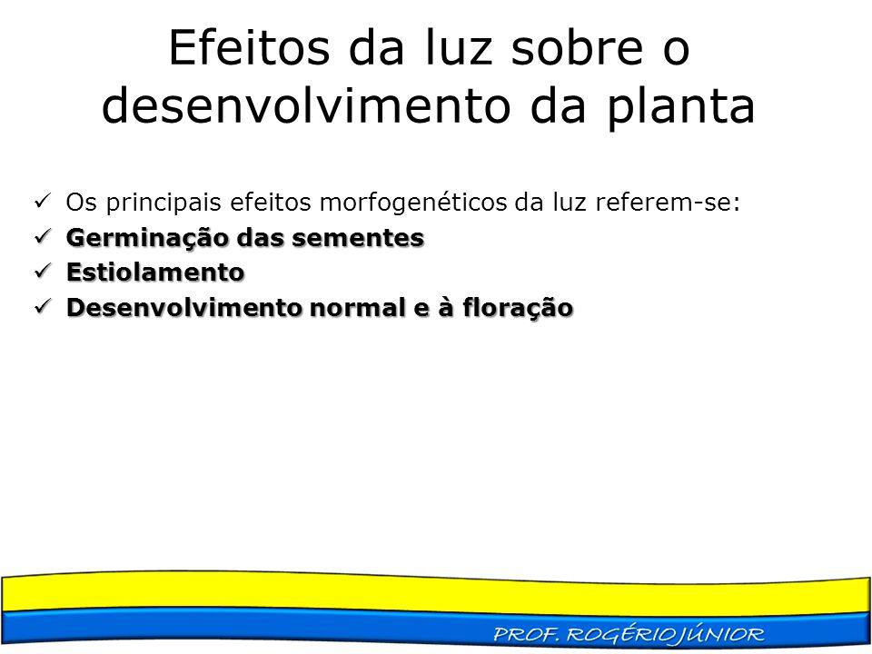 Efeitos da luz sobre o desenvolvimento da planta