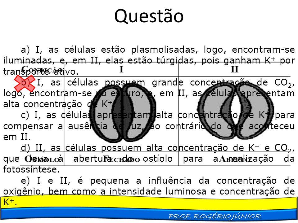 Questão a) I, as células estão plasmolisadas, logo, encontram-se iluminadas, e, em II, elas estão túrgidas, pois ganham K+ por transporte ativo.