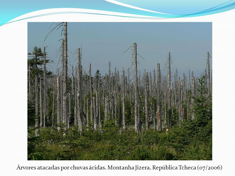 Árvores atacadas por chuvas ácidas