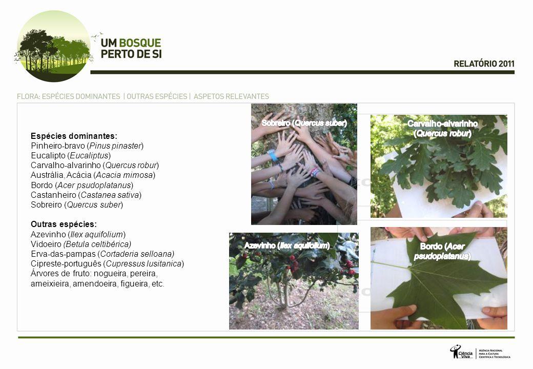 Carvalho-alvarinho (Quercus robur)