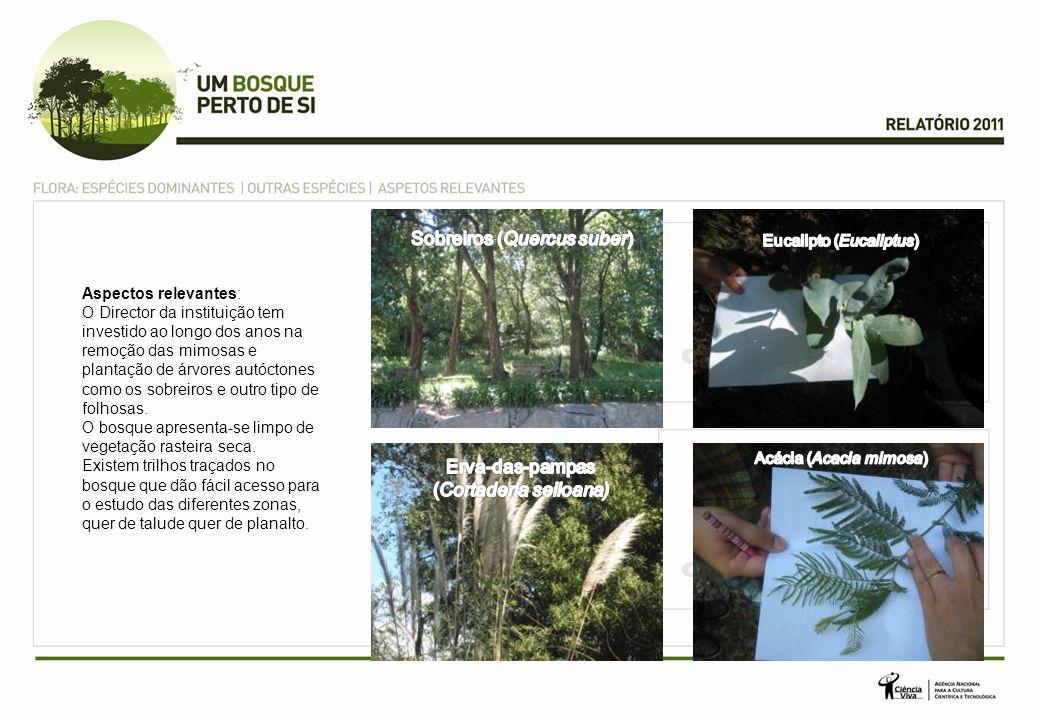 Sobreiros (Quercus suber)