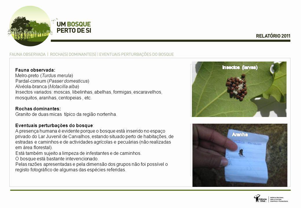 Insectos (larvas) Fauna observada: Melro-preto (Turdus merula) Pardal-comum (Passer domesticus) Alvéola-branca (Motacilla alba)