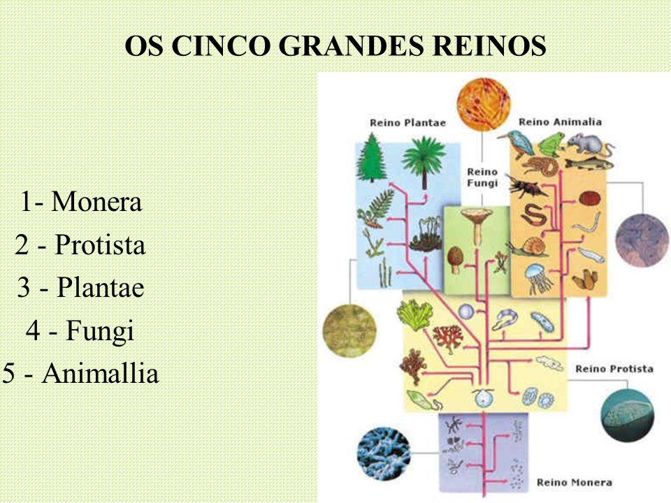 OS CINCO GRANDES REINOS