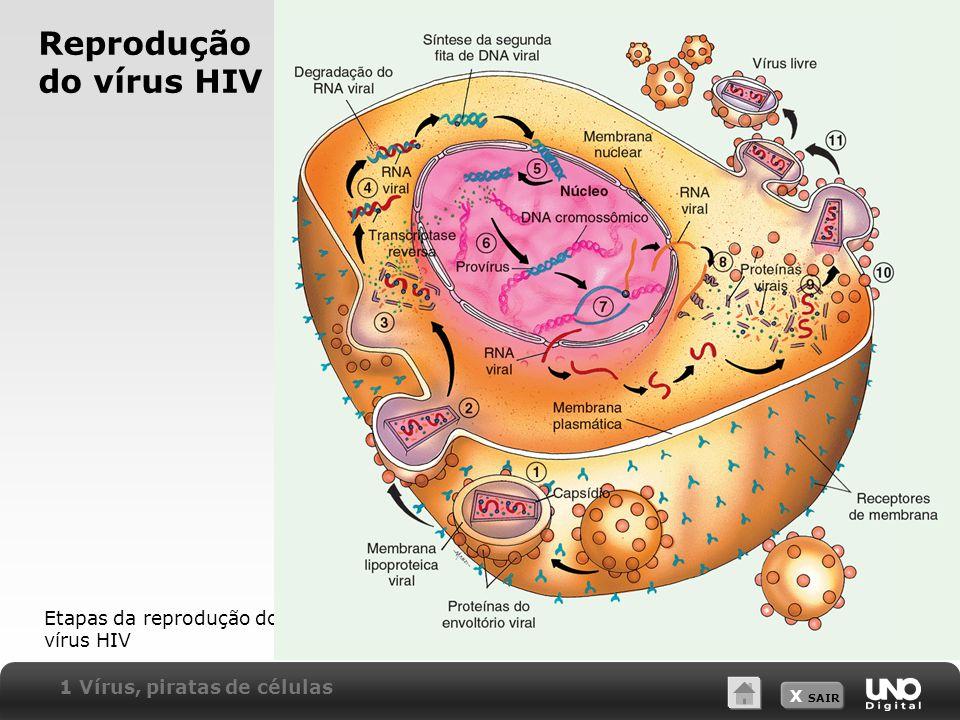 Reprodução do vírus HIV